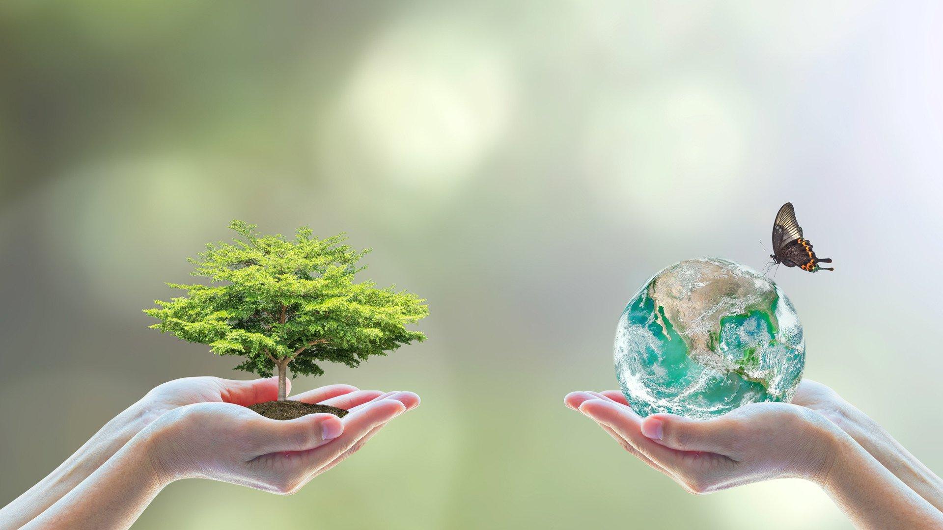 Nachhaltigkeit für die Region und Umwelt
